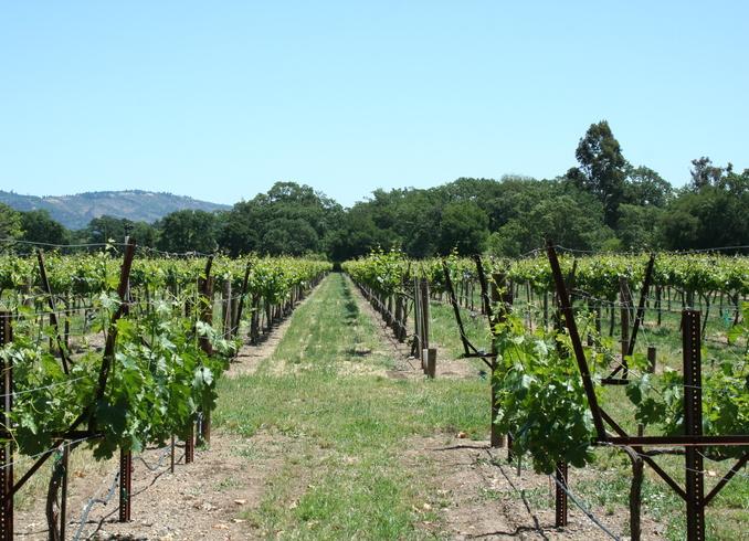 США | Виноградники, долина Napa