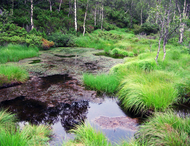 Норвегия   Болото в горах