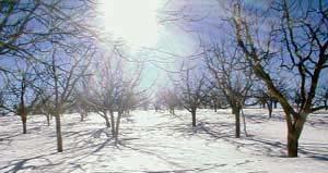 Сирия | (зима в блудан) (сандрин фарах)номер тел(00963944612723) всё фото про сирий сам паставиль