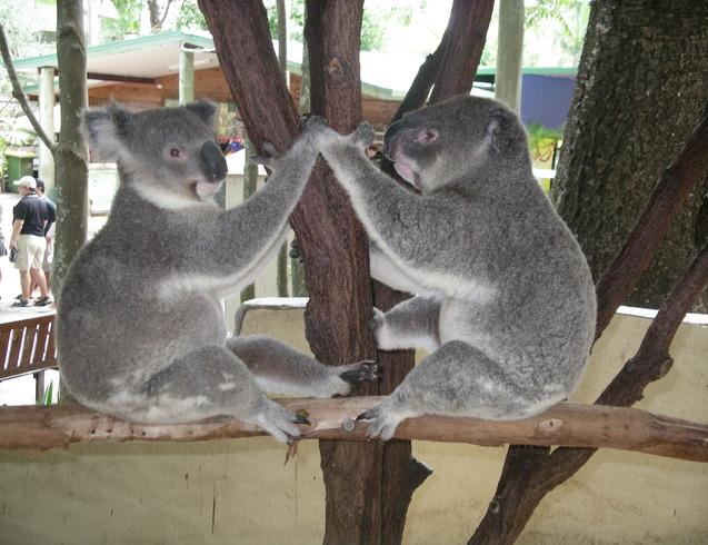 Австралия |