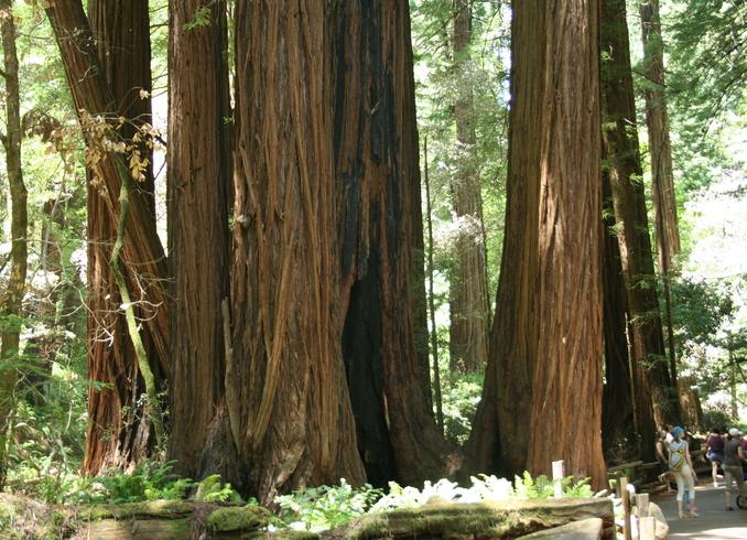 США | Redwood, Сан-Франциско
