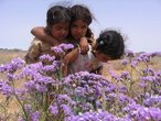 | flowers & childern from Western Sahara