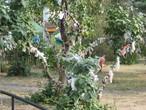 | Дерево Любви в городском парке Волгограда