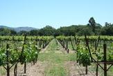 | Виноградники, долина Napa