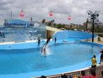 | Дельфинарий, район Мирамар, Гавана. Представление с дельфинами.