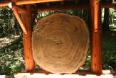 | Срез дерева, парк Redwood, Сан-Франциско