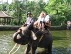 | Сафари на слонах
