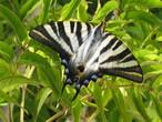 | Бабочка в нашем саду. г.Лагош .Алгарве.