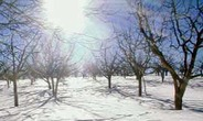 | (зима в блудан) (сандрин фарах)номер тел(00963944612723) всё фото про сирий сам паставиль