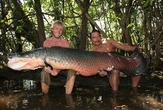 | Амазония. Самая крупная пресноводная рыба Арапаима.  Читайте о ней на сайте www.colombia.su (http://forum.colombia.su/index.php?topic=301.0)