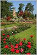 | Сорок тысяч розовых кустов украшают Женеву