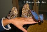 | Бабочки Колумбии.