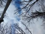 | лес в начале весны