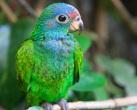 | Птицы Колумбии